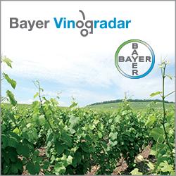 bayer_vinogradar_250